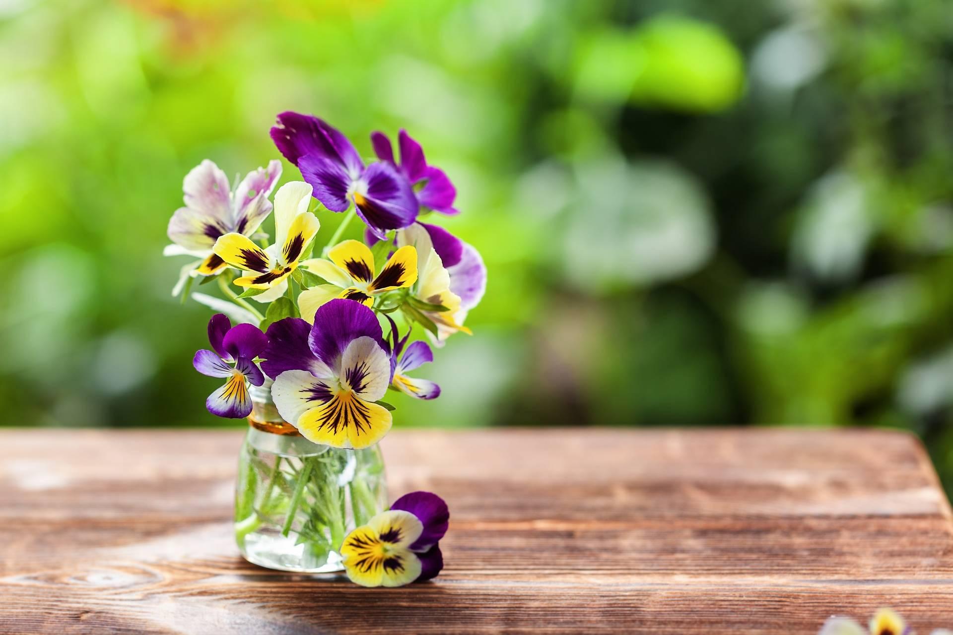 Bukiet bratków w wazoniku na drewnianym stole w ogrodzie. Jakie właściwości i zastosowanie ma fiołek trójbarwny?