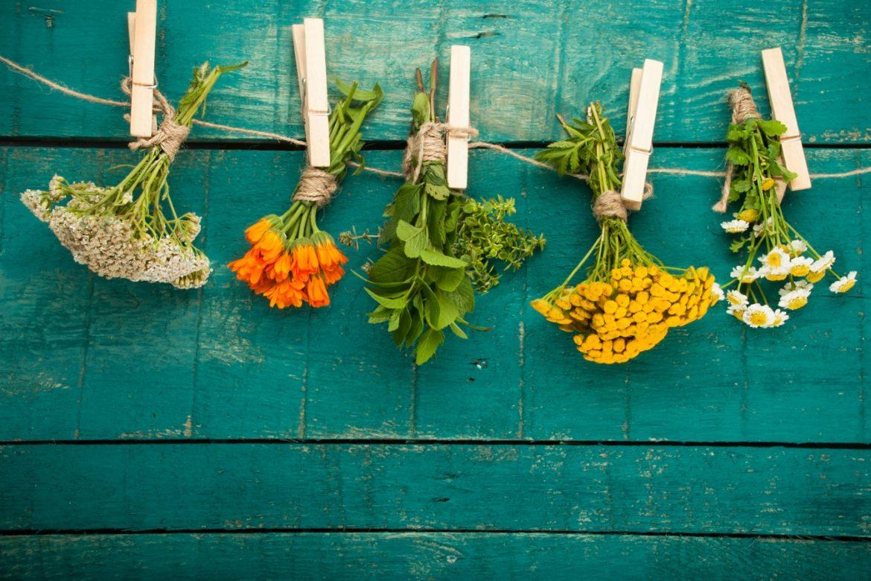 Piotr Ciemny: pokochaj chwasty na talerzu. Jak zbierać i wykorzystywać chwasty i dzikie zioła w kuchni? Dzikie kwiaty wiszą na sznurku na tle zielonej drewnianej ściany.