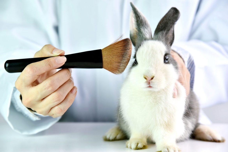 Kosmetyki nie testowane na zwierzętach - jak i gdzie ich szukać? Jak znaleźć kosmetyki cruelty free? Królik poddawany badaniom w laboratorium z przystawionym pędzelkiem do makijażu do uszu.