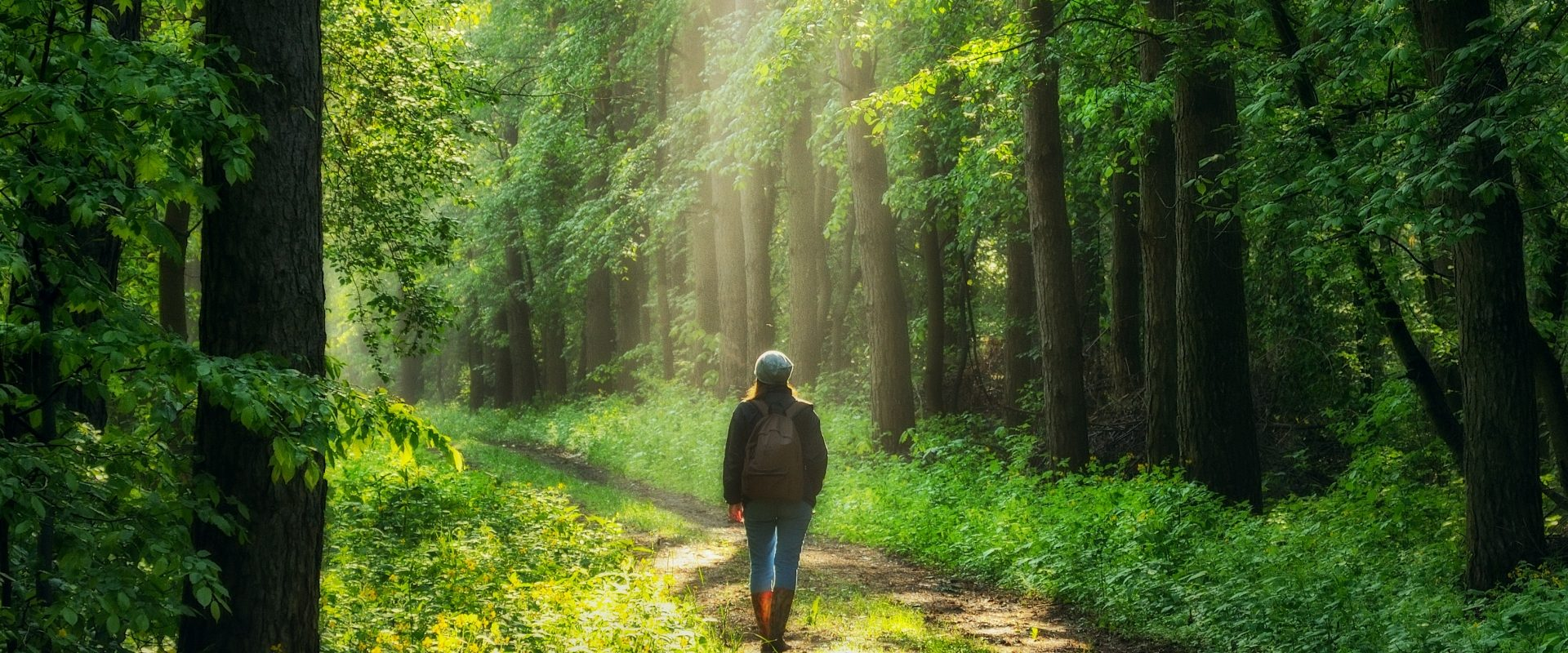Sylwoterapia, czyli leśna kąpiel. Na czym polega?