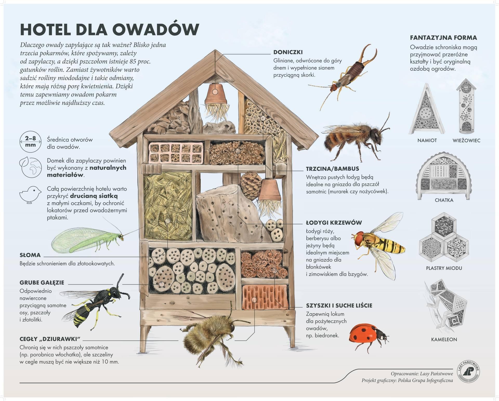 Domek dla owadów - jak zbudować hotel dla pszczół? Infografika