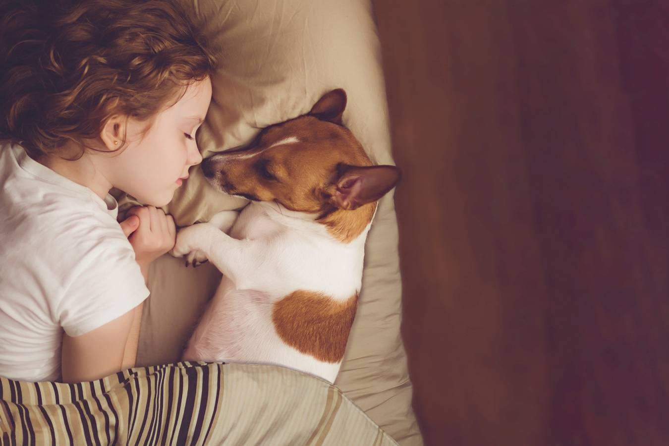 Alergia na zwierzęta - jak z nią walczyć? Dziewczynka śpi ze swoim pieskiem w łóżku.