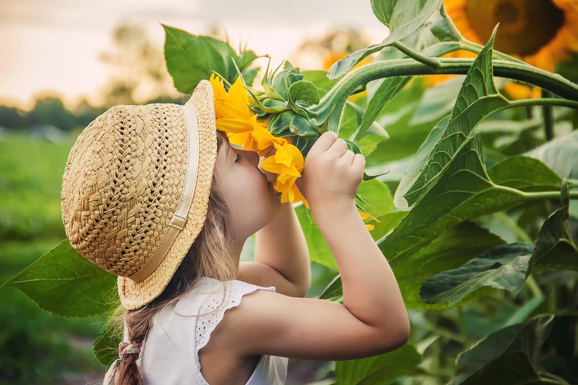 Dziewczynka wącha kwiat słonecznika na polu słonecznikowym. Czym jest syndrom deficytu natury u dzieci.