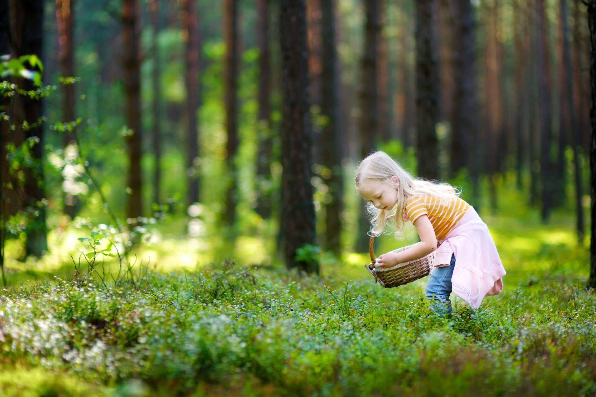 Borelioza - jakie są badania na boreliozę i co oznaczają wyniki testów? Dziewczynka zbiera jagody w lesie.