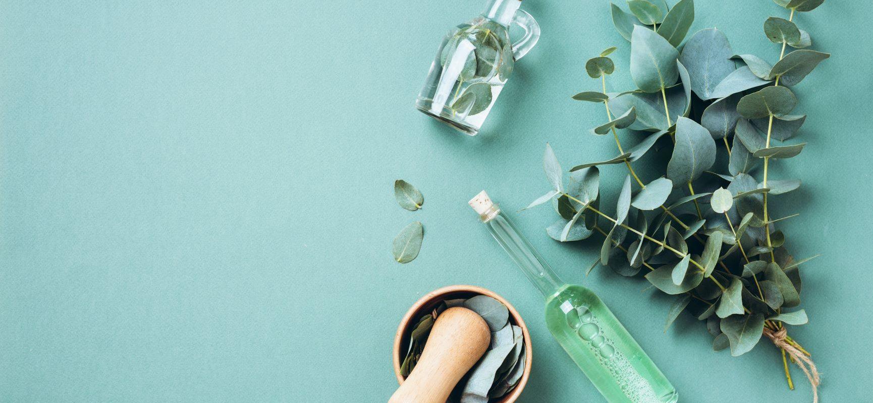 Eko dezynfekcja z olejkiem eukaliptusowym w roli głównej. Olejek eukaliptusowy używany jest do ekologicznego sprzątania, masażu i inhalacji. Jak zrobić domowe środki czystości DIY z olejkiem eukaliptusowym?