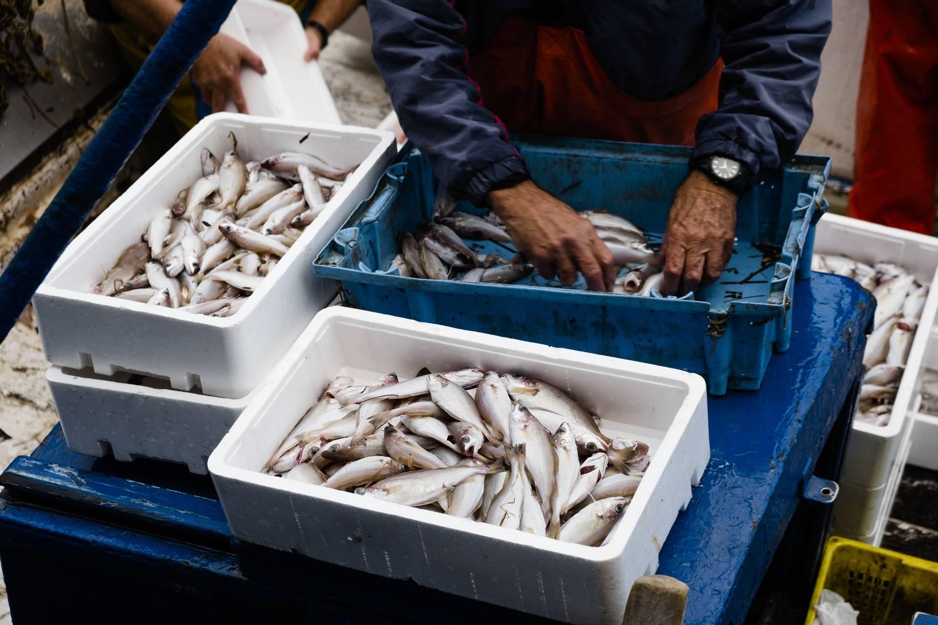 Lokalne rynki rybne - jak wspierać rybaków, a jednocześnie dbać o życie w oceanach?