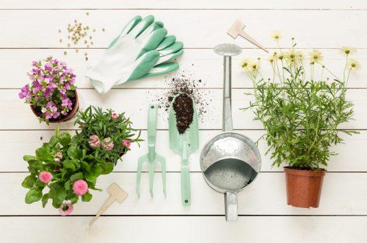 Hortiterapia - jak działa ogród terapeutyczny?