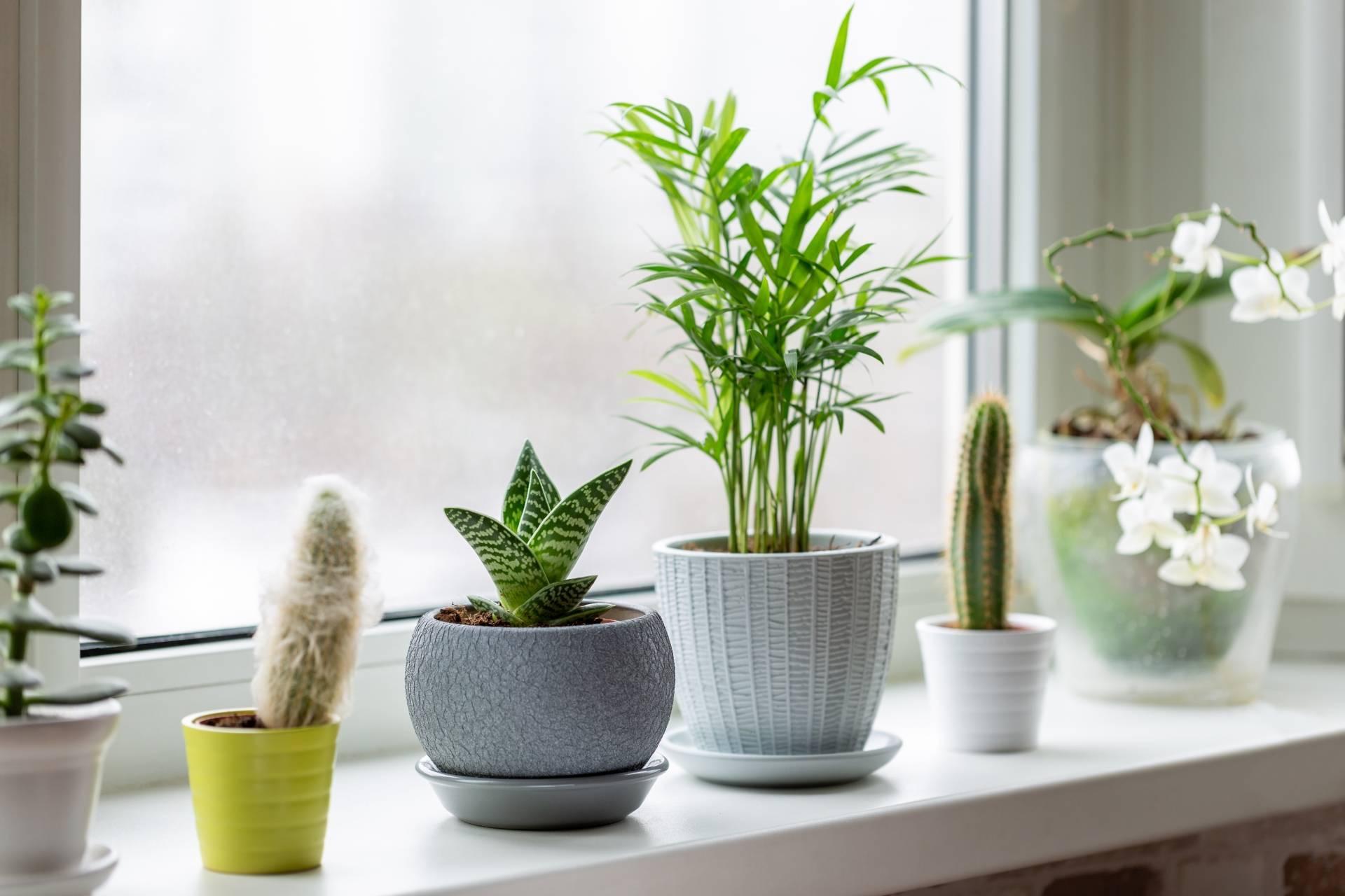 Jak pielęgnować kwiaty domowe zimą? Rośliny doniczkowe stoją na parapecie, za oknem zimowy krajobraz.