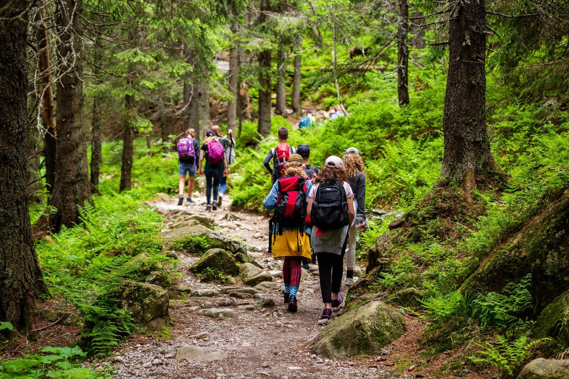 Shinrin-yoku - japońskie kąpiele leśne. Grupa spacerowiczów przemierza leśne ścieżki.