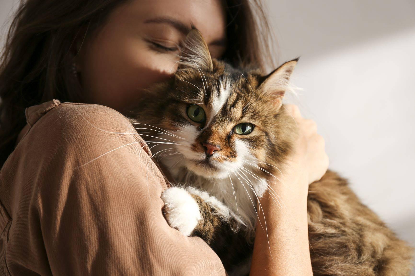 Przytualnie kota niweluje stres - na czym polega felinoterapia? Kobieta przytula puchatego kota.