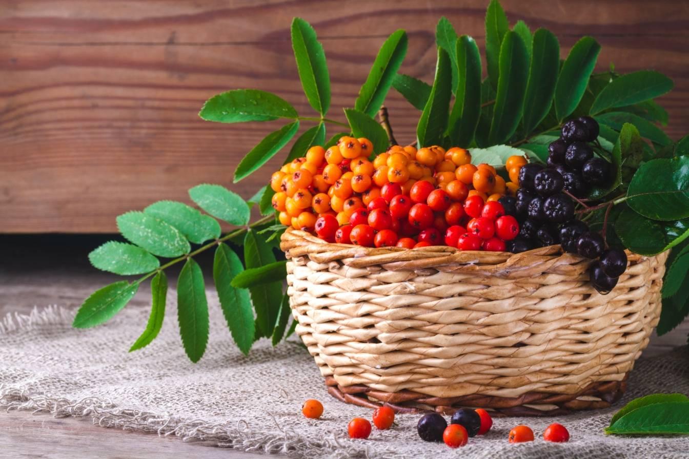 Koszyk wiklinowy z kolorowymi owocami jarzębiny. Co można zrobić z jarzębiny? Przepisy na przetwory z jarzębiny - właściwości i zastosowanie.