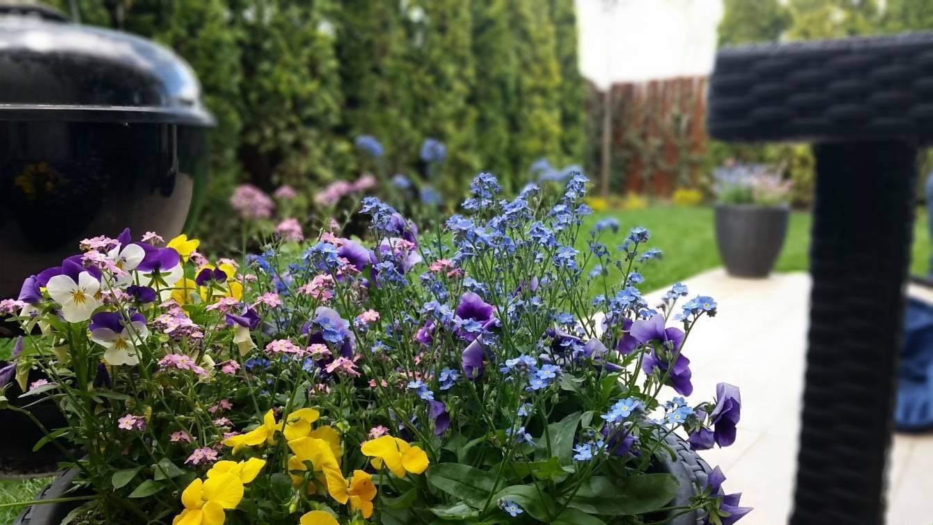Kompozycje kwiatowe na wiosennym balkonie - bratki i niezapominajki w jednej donicy.