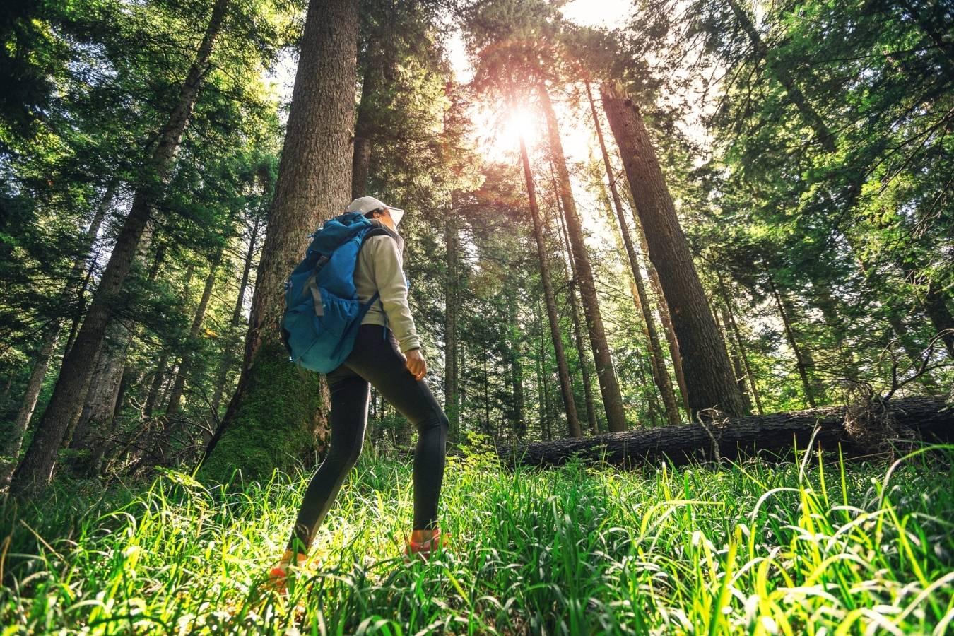 Kontakt z naturą pomaga zmniejszyć poziom stresu.