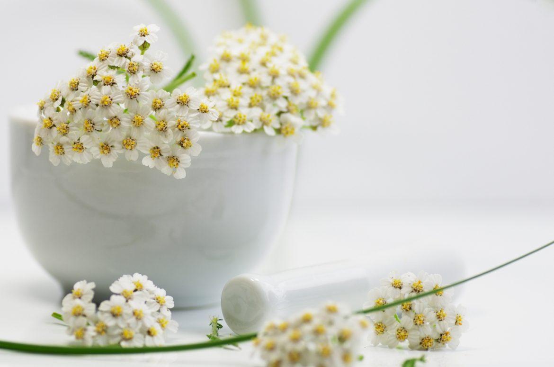 Krwawnik pospolity - właściwości lecznicze i zastosowanie. Kwiaty krwawnika w białej misce na białym bracie.