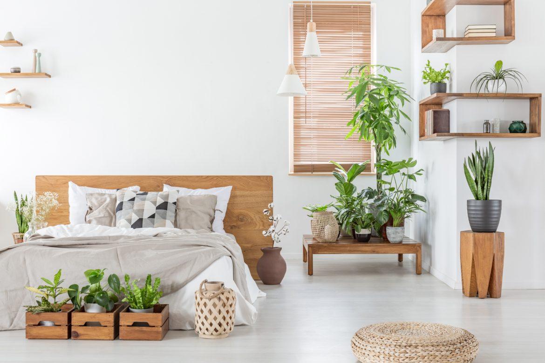 Kwiaty Do Sypialni Rosliny Oczyszczajace Powietrze Naturalnie O Zdrowiu
