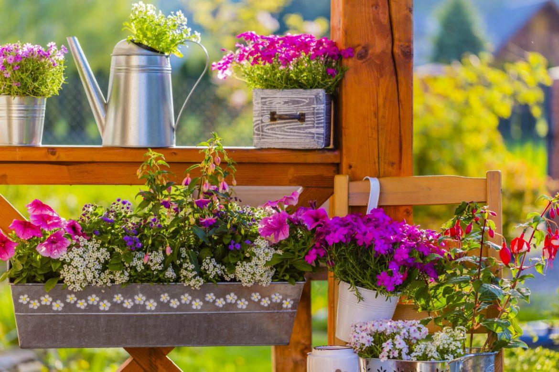 Balkon na wiosnę - jakimi kwiatami wiosennymi go udekorować? Niezapominajki, prymulki, stokrotki, bratki, kwiaty cebulowe.