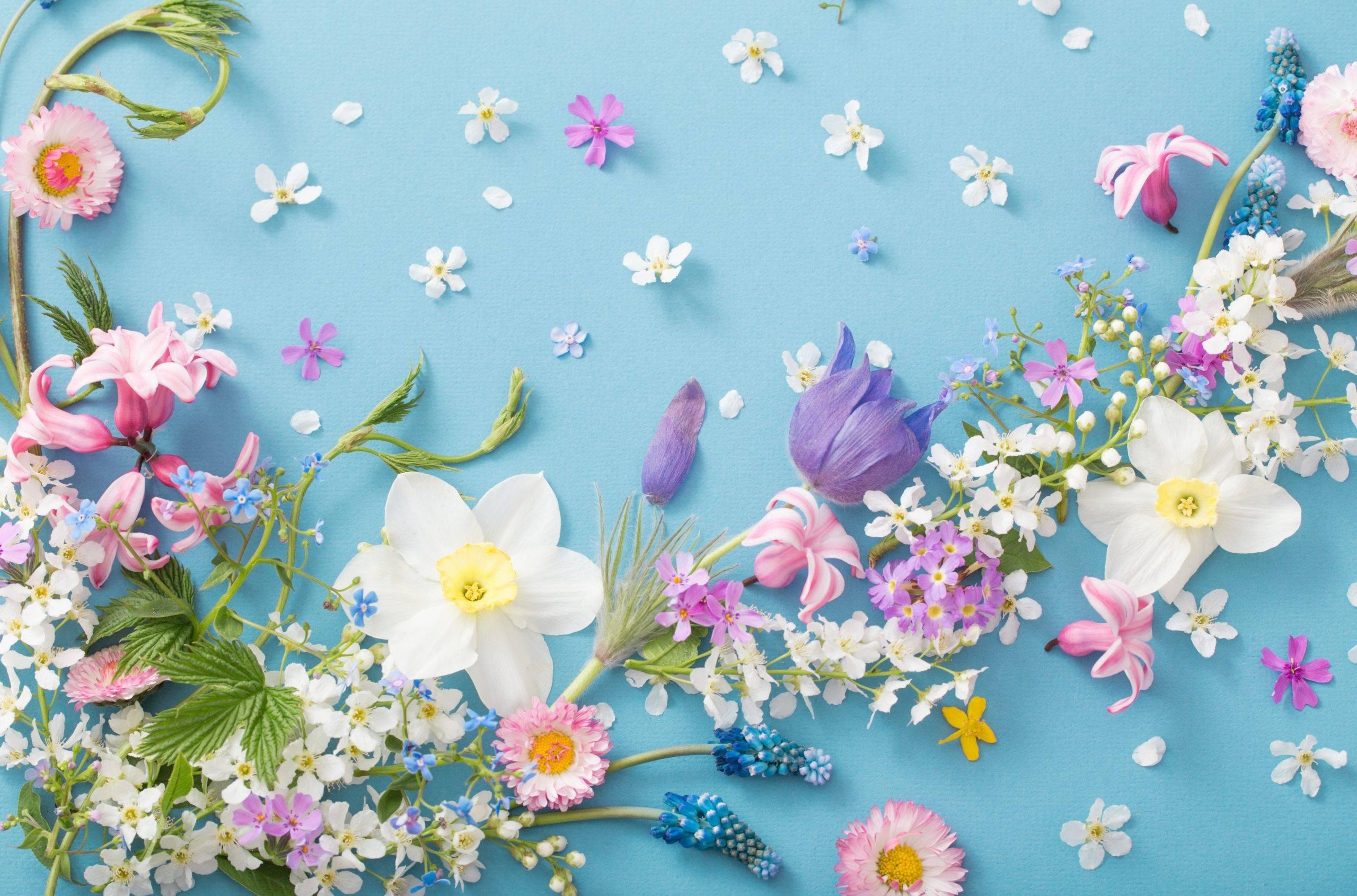 Homeopatia na reumatyzm. Kompozycja kwiatowa: kolorowe kwiaty i pojedyncze płatki leżą rozrzucone na niebieskim tle.