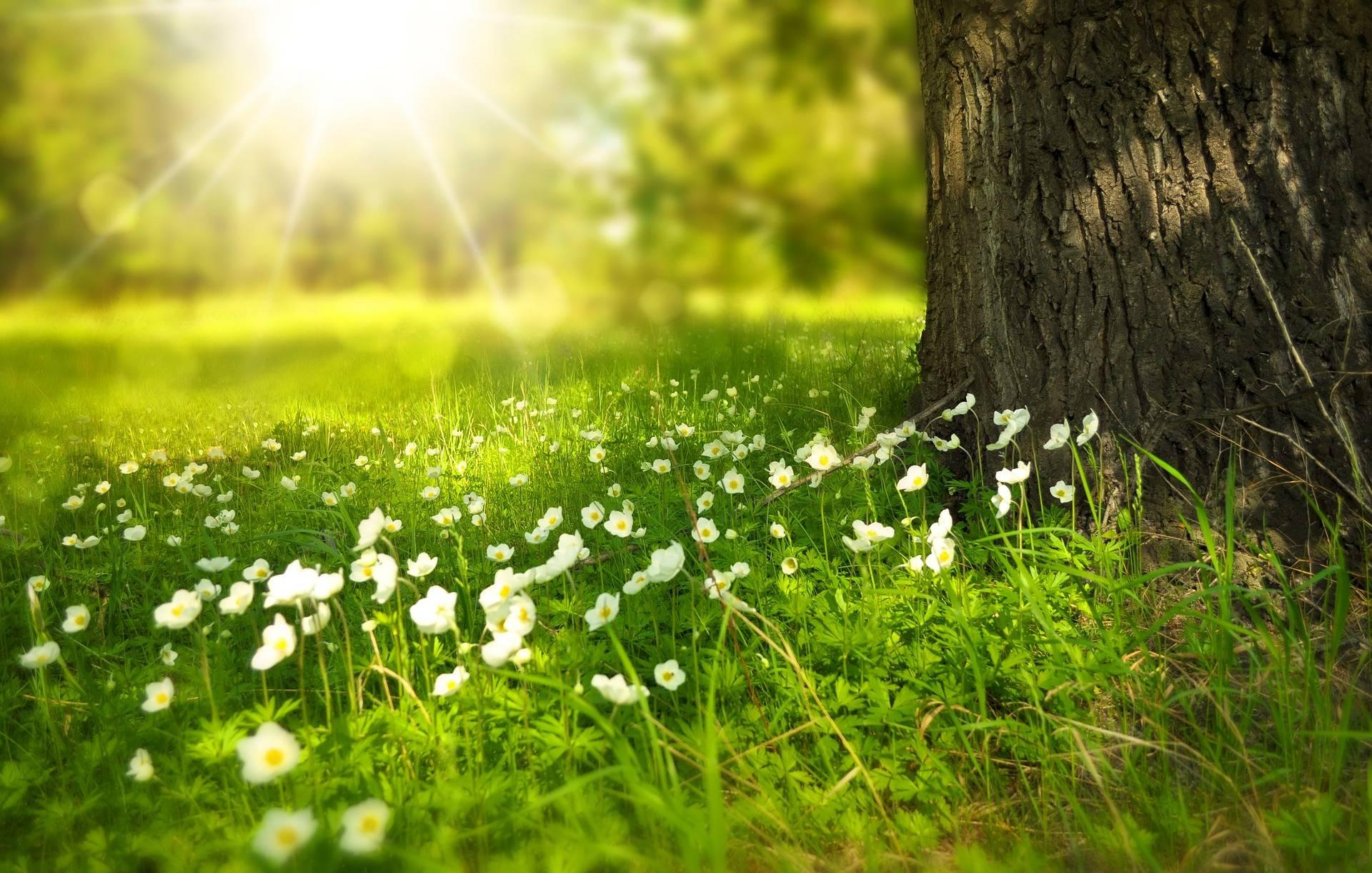 Alergia w medycynie chińskiej. Zielona łąka leśna, na której rosną drobne białe kwiatki, obok stoi drzewo.