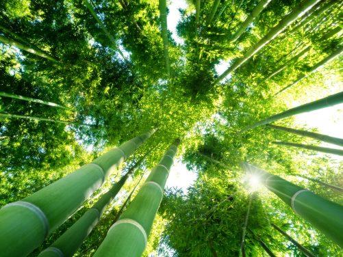 Bambus - surowiec idealny?