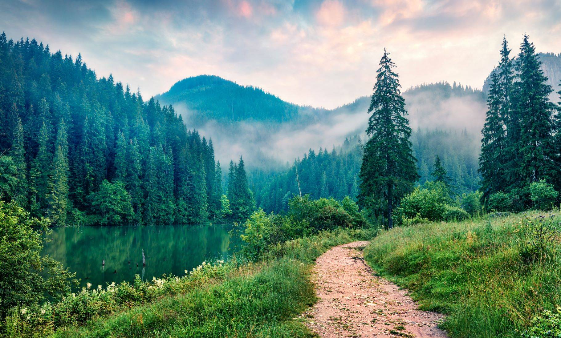 Sylwoterapia - na czym polega leczenie drzewami?