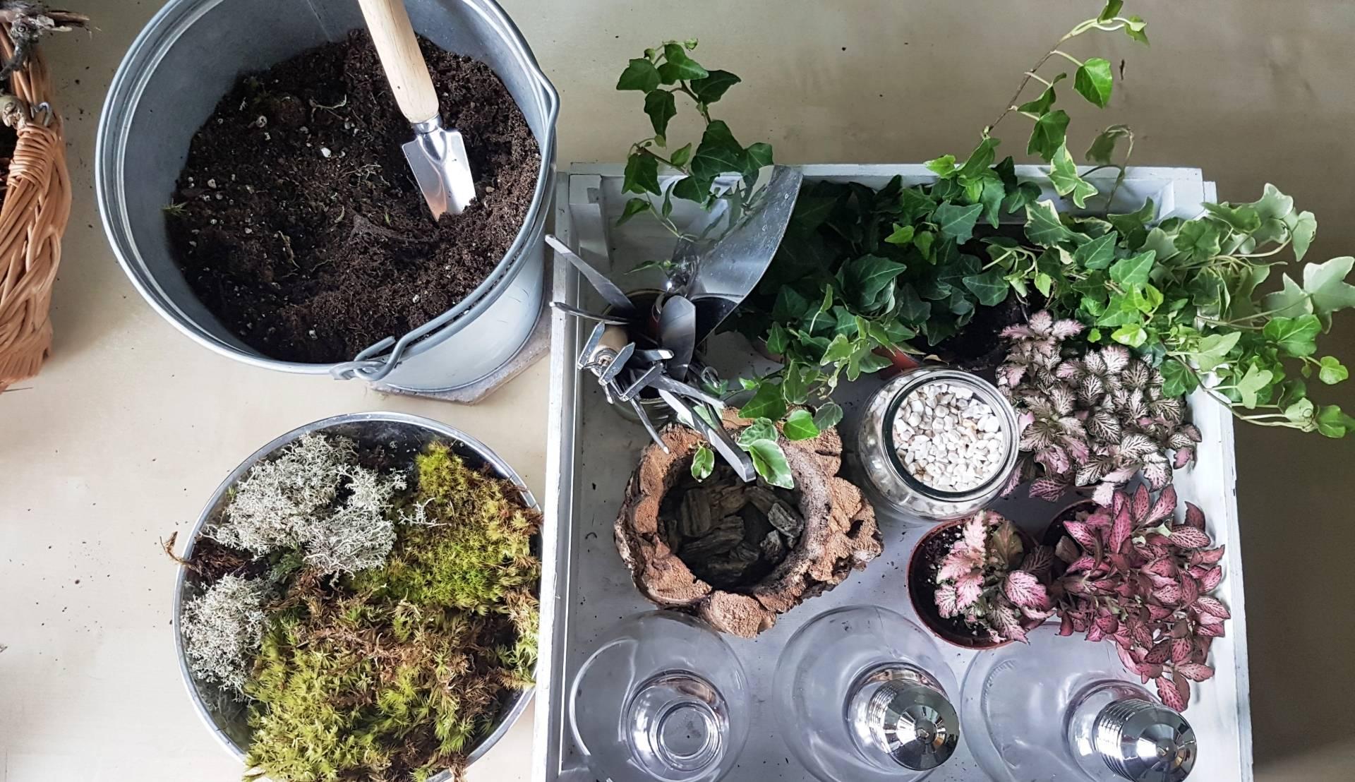 Jak zrobić las w słoiku krok po kroku? Ziemia, rośliny do słoju, dodatki dekoracyjne.