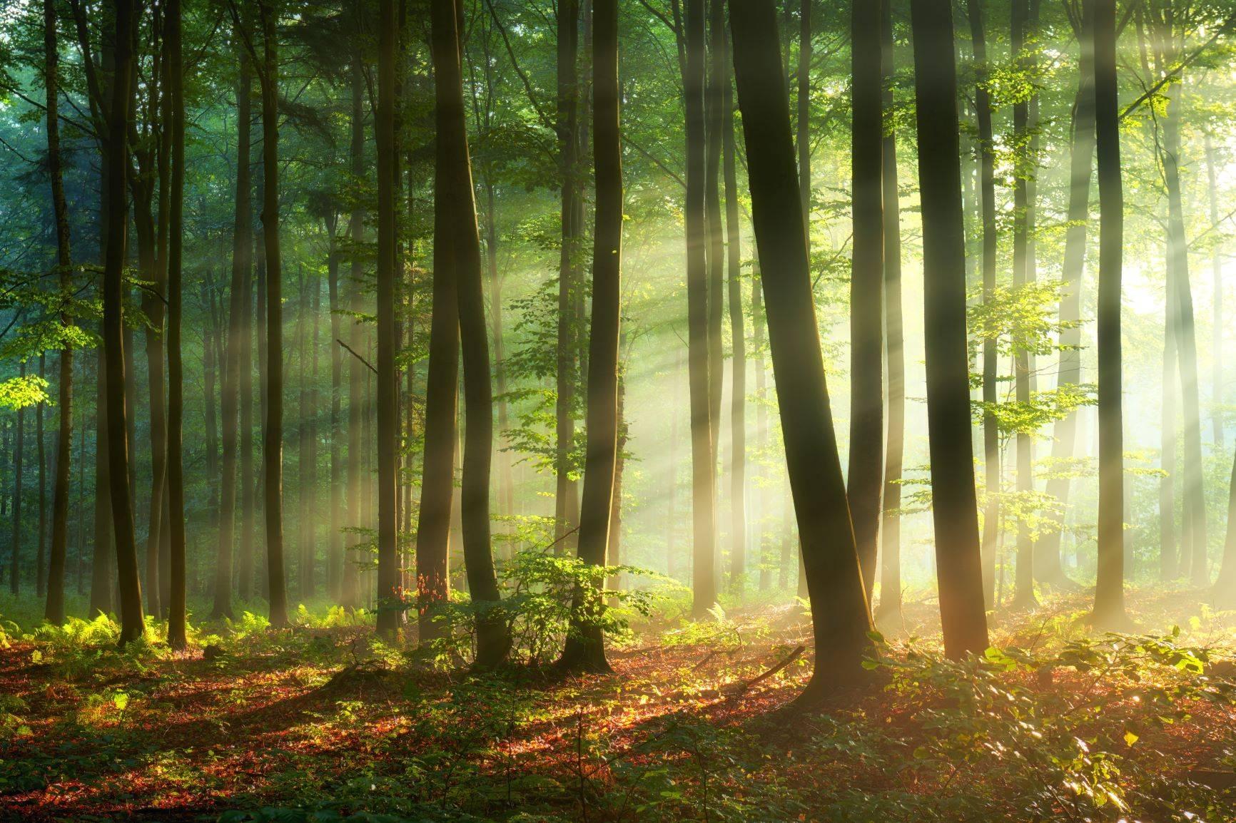 Leśna kąpiel, czyli jak wygląda sylwoterapia?