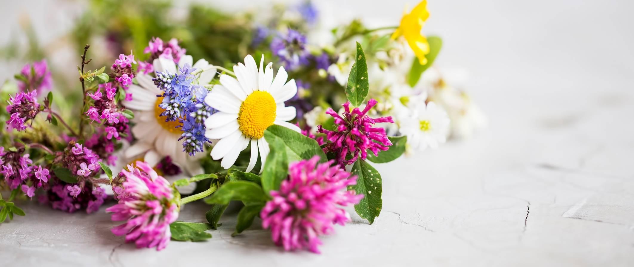 Leczenie siłami natury - leczenie ziołami i roślinami.