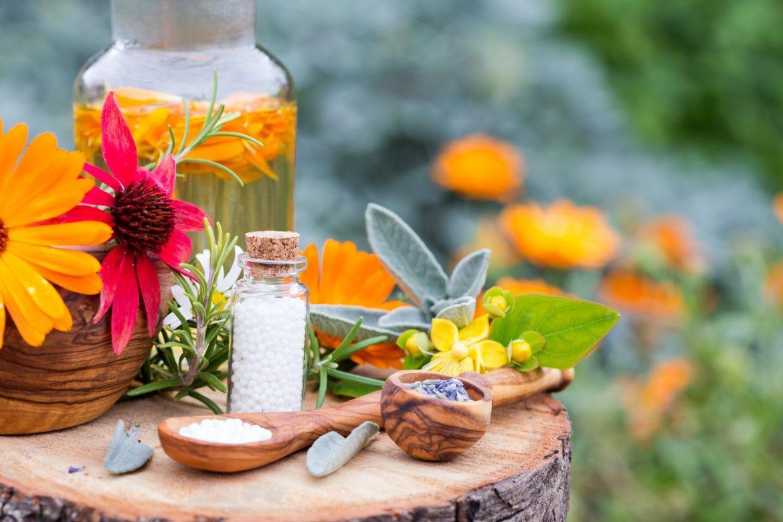 Dulcamara - leki homeopatyczne w otoczeniu kwiatów i ziół na pieńku drzewa.
