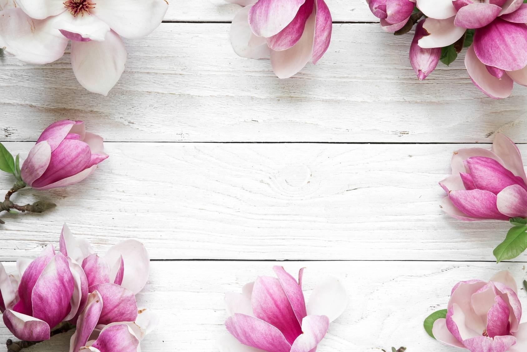Magnolia w lecznictwie.