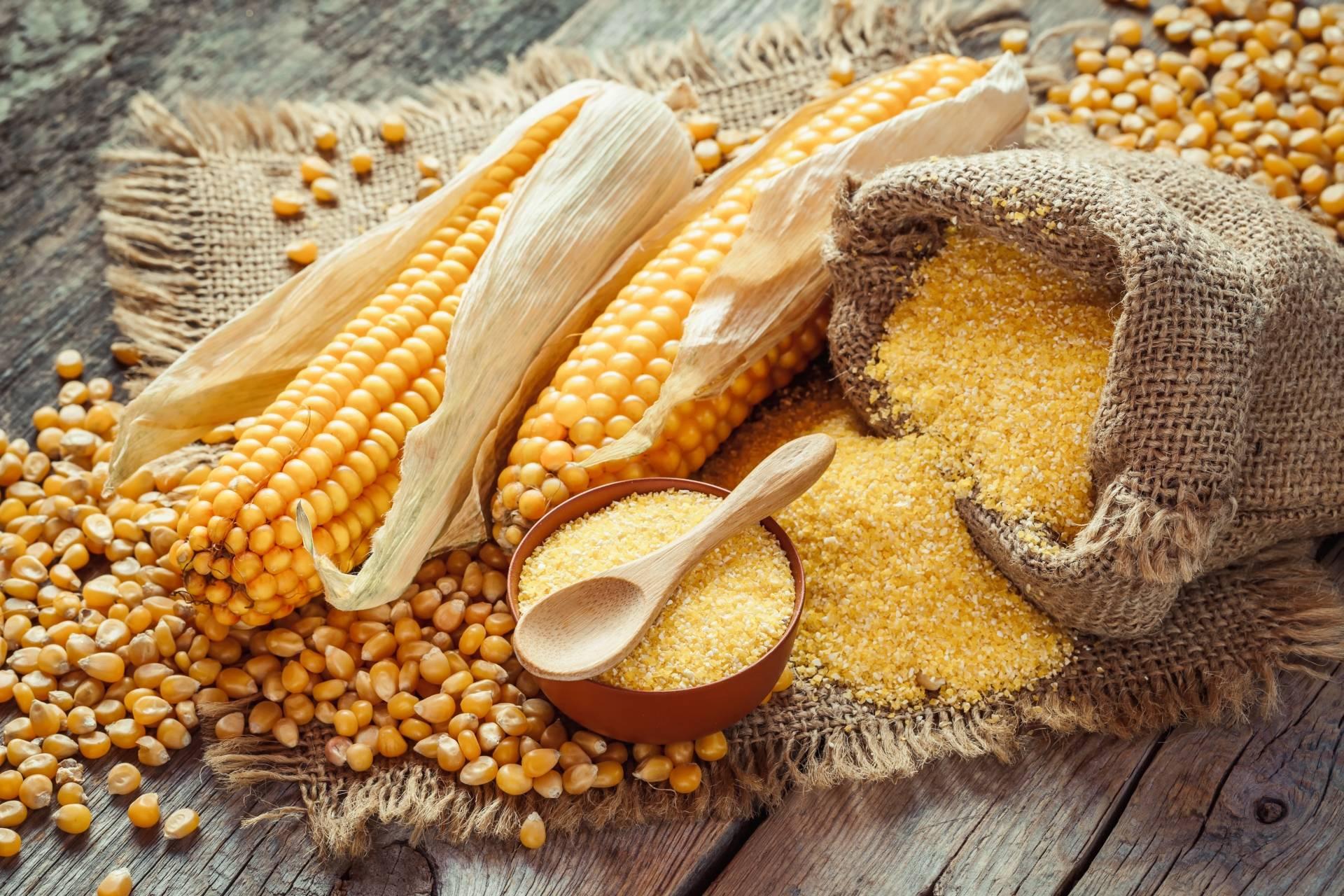 Mąka kukurydziana bez glutenu i ziarna kukurydzy w woreczkach i miseczkach. Obok leżą dwie kolby kukurydzy.