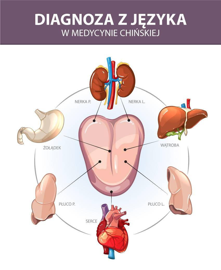 Mapa języka w medycynie chińskiej.