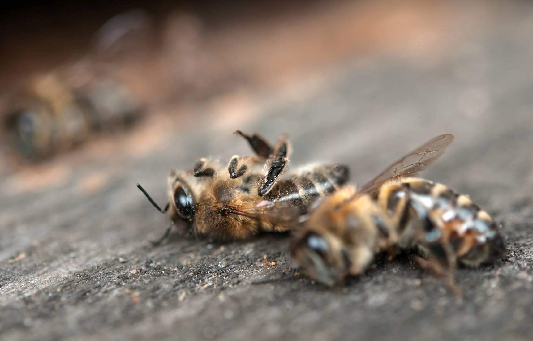 Pestycydy zabijają pszczoły! Podpisz apel.