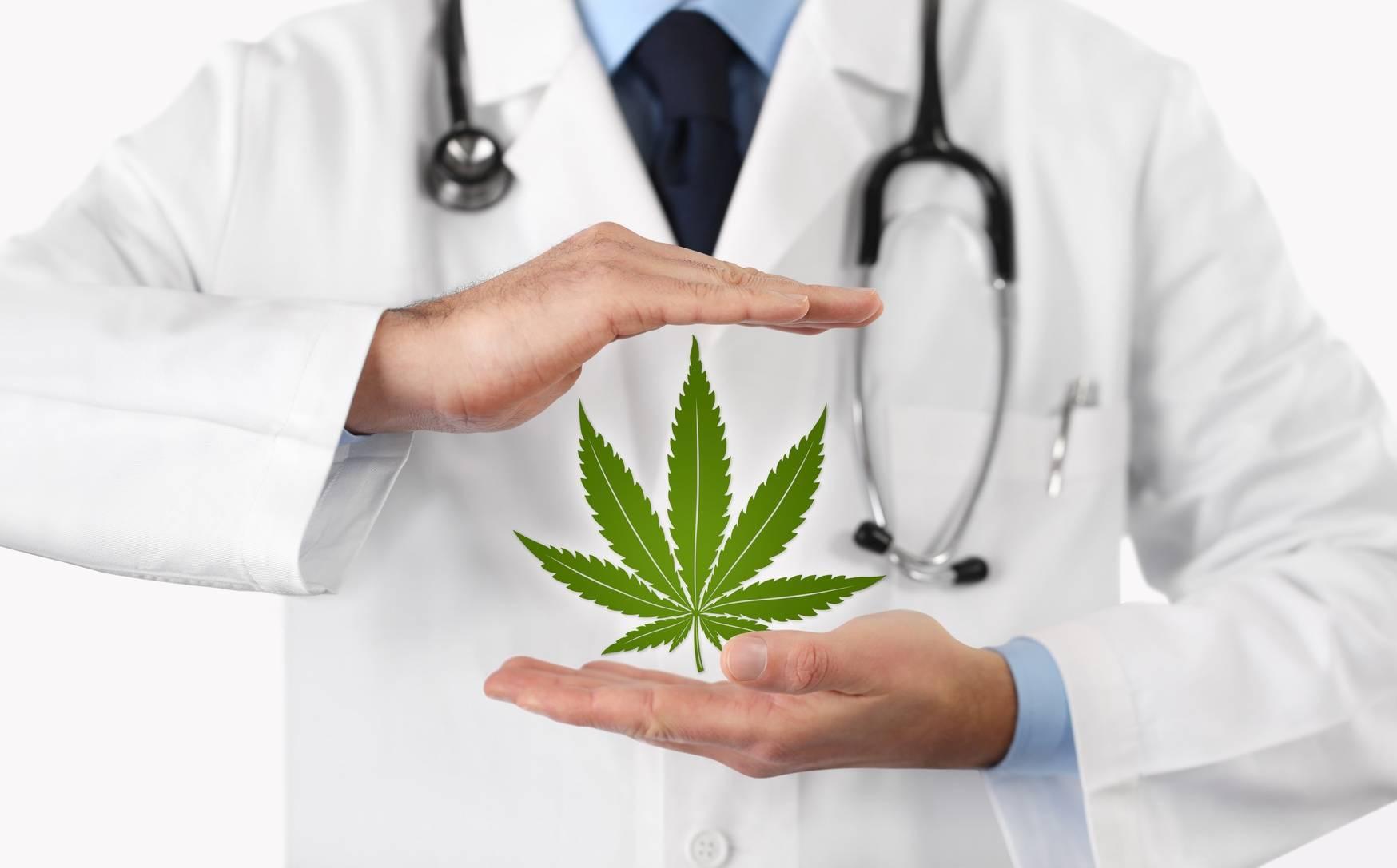 Czym jest układ endokannabinoidowy i jaką pełni funkcję w organizmie? Lekarz prezentuje liść medycznej marihuany.
