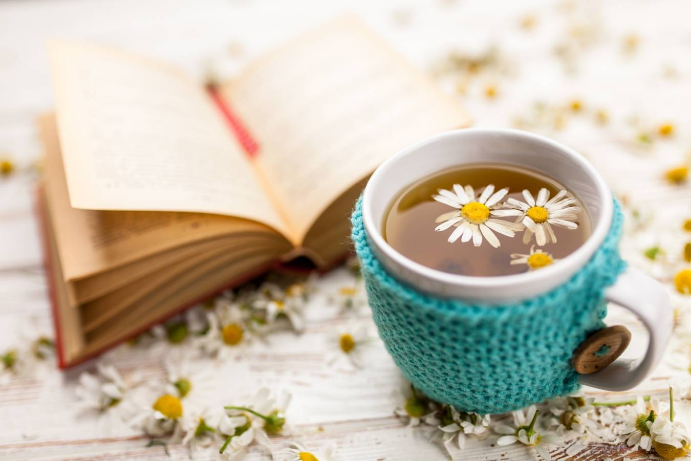 Jak leczyć przeziębienie według medycyny chińskiej? Kubek herbaty rumiankowej w sweterku stoi obok otwartej książki, wokół leżą kwiatki rumianku.