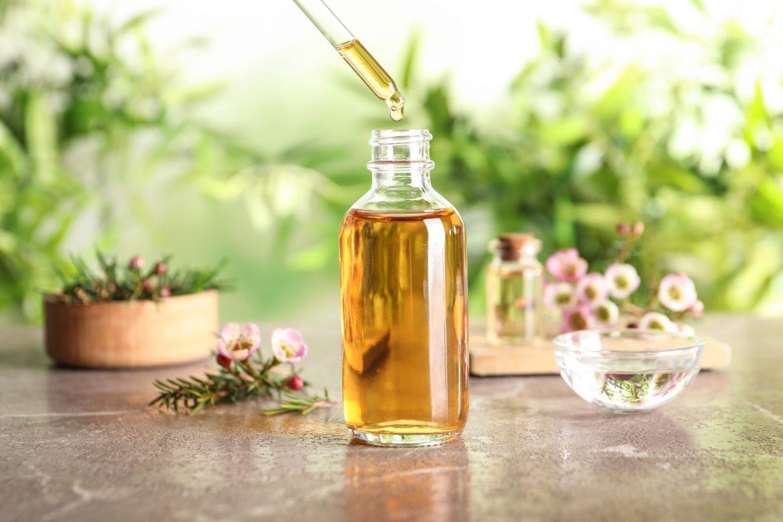 Olejek z drzewa herbacianego - jakie ma zastosowanie i właściwości? Na jakie problemy skórne go stosować? Butelka olejku herbacianego stoi na blacie w otoczeniu przyrody, suszonych kwiatów i innych buteleczek.