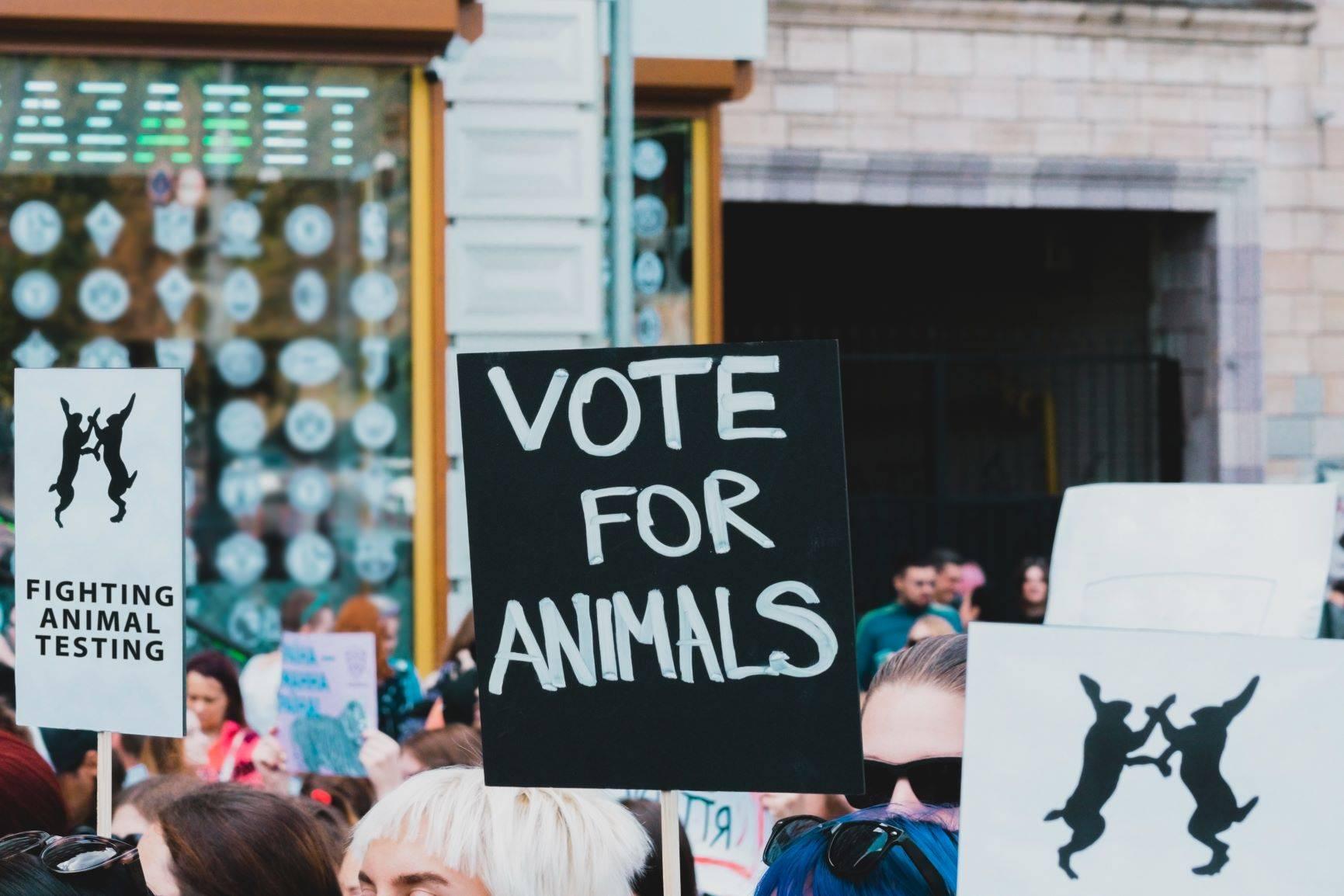Kosmetyki nie testowane na zwierzętach - jak je znaleźć?