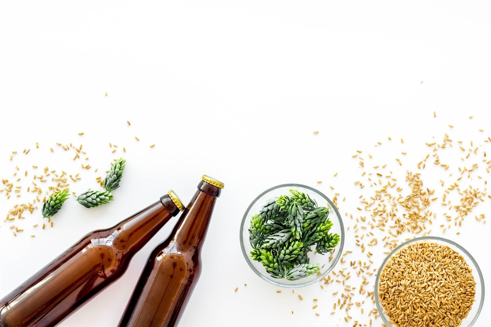 Piwo na włosy. Dwie ciemne butelki piwa leżą na białym blacie. Obok stoją miseczki z chmielem i jęczmieniem.