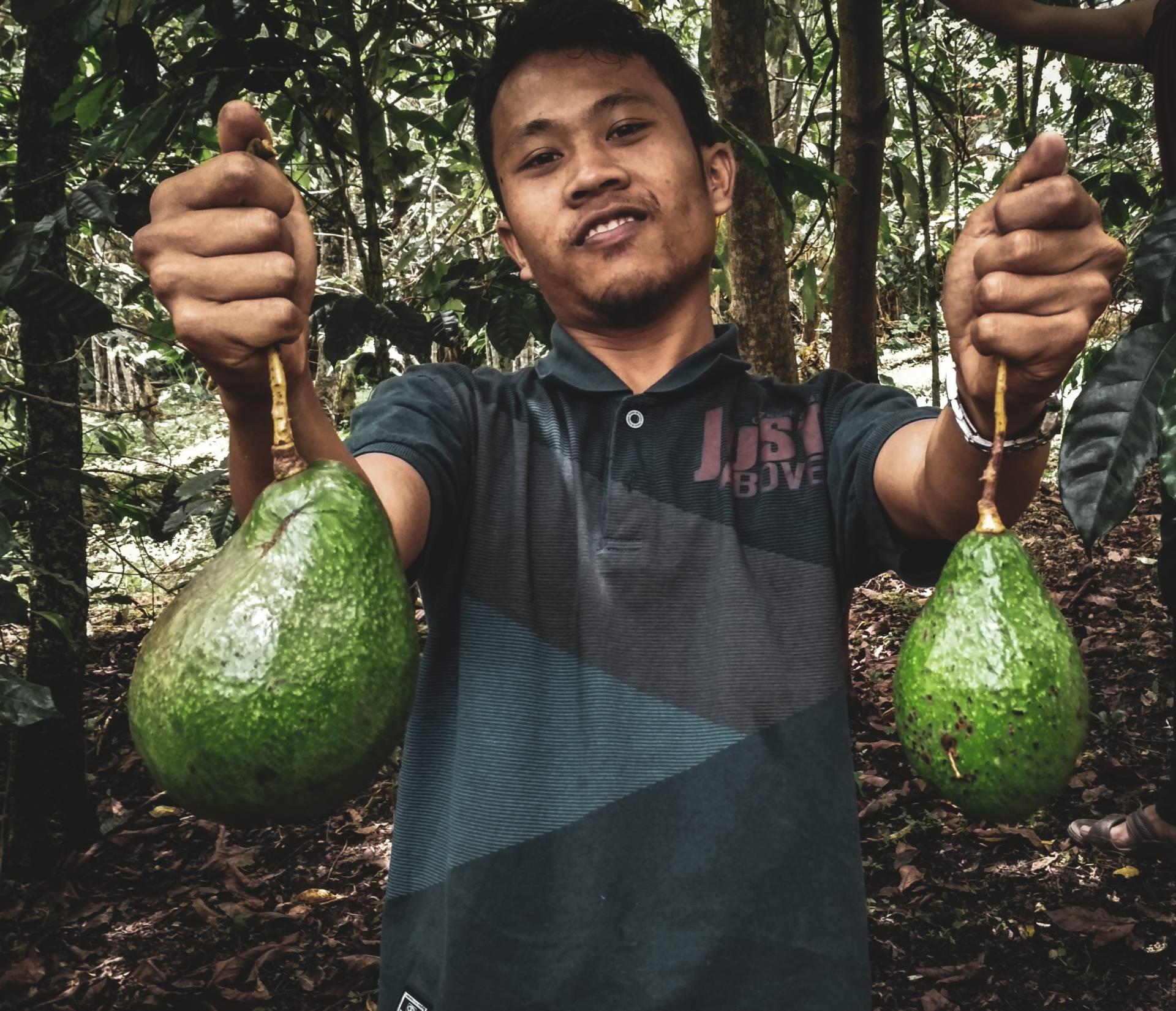 Kartele narkotykowe wykorzystują popyt na awokado, by czerpać zyski z uprawy awokado w Meksyku. Mężczyzna trzyma dwa owoce awokado i pozuje z nimi do aparatu.