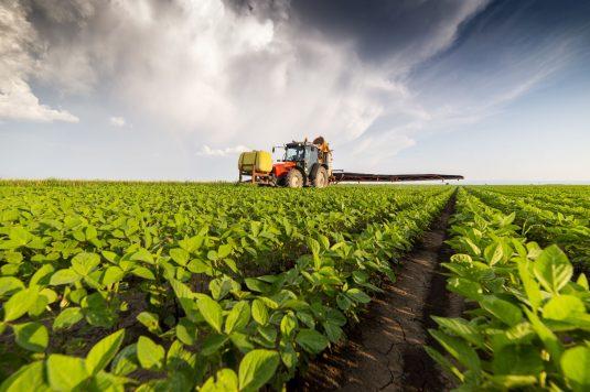 Czy polskie plony są toksyczne?