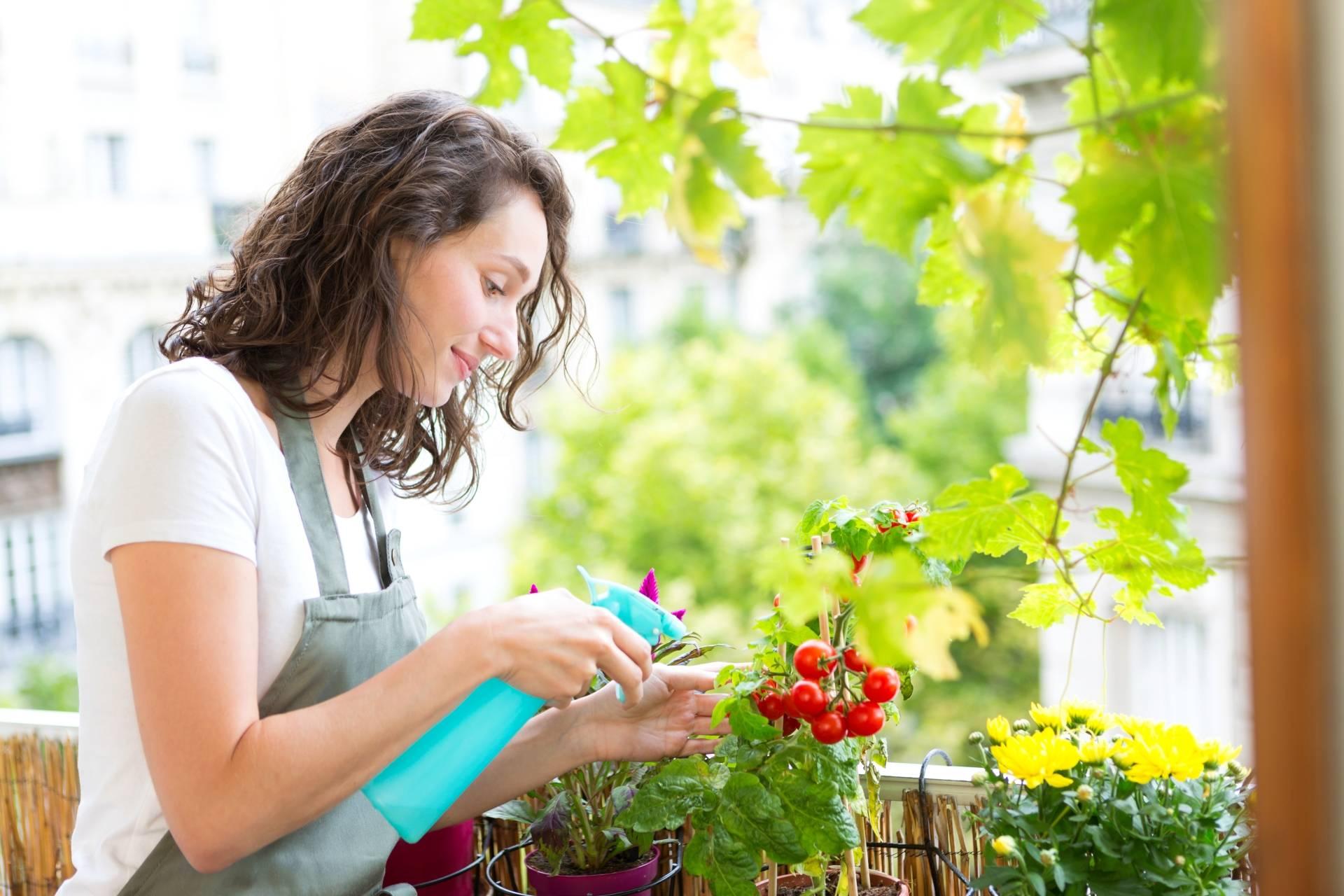Trujące rośliny doniczkowe. Kobieta pielęgnuje kwiaty balkonowe, zrasza je wodą ze spryskiwacza.