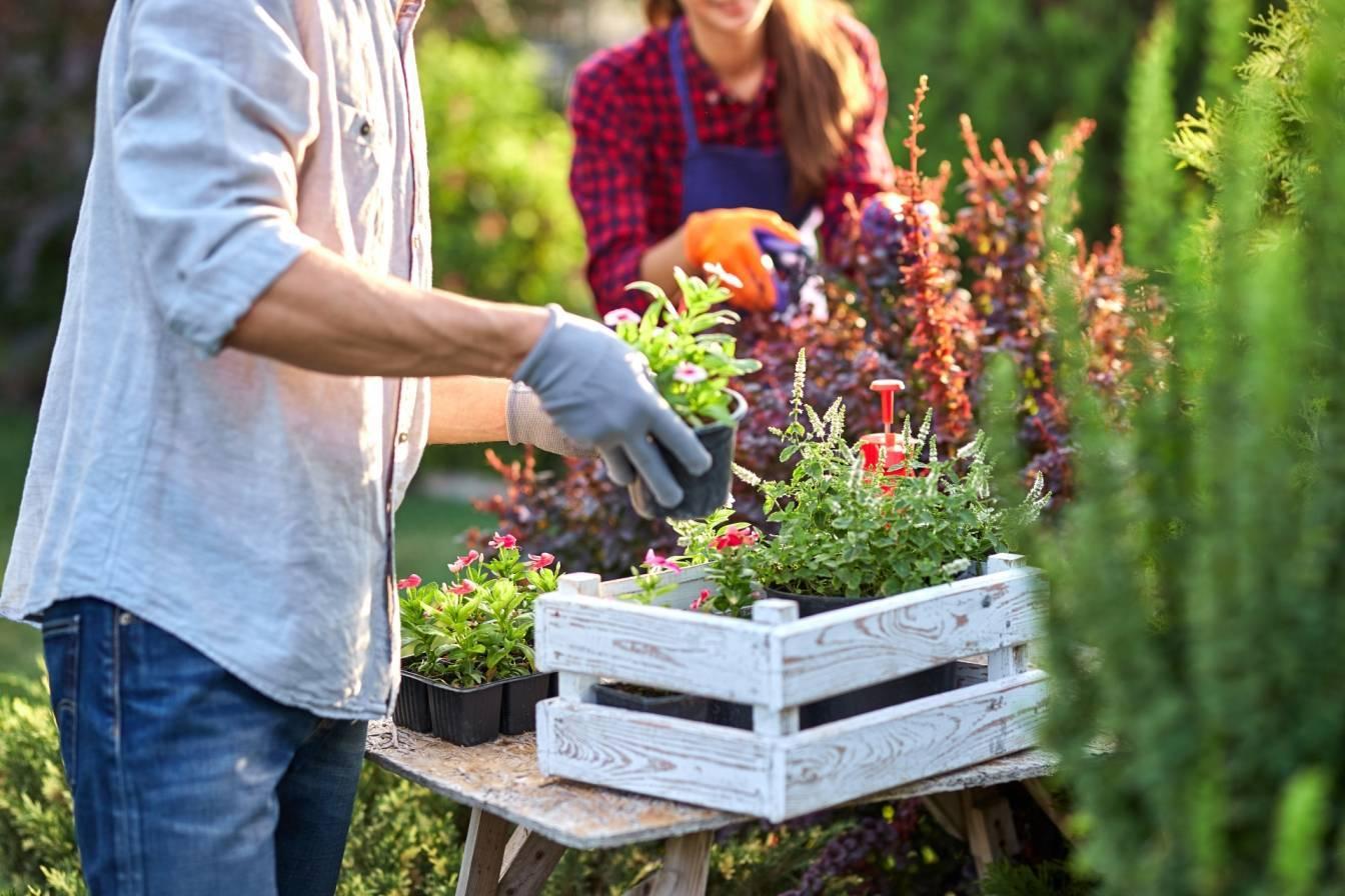 Eko ogród - jak go założyć? Mężczyzna i kobieta pracują w ogródku, układają kwiaty w drewnianych skrzynkach.