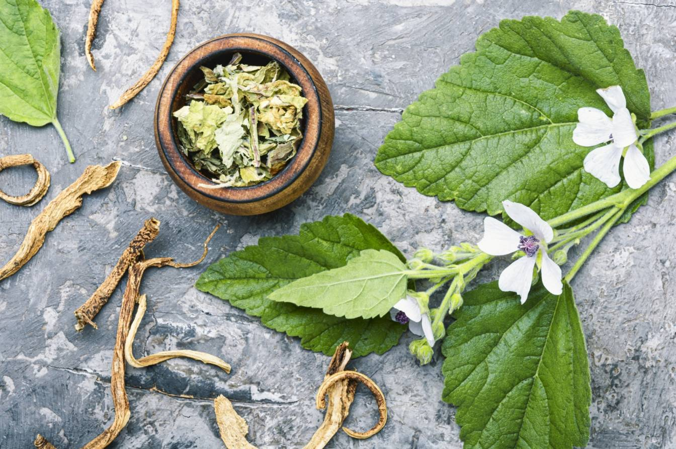 Jak stosować prawoślaz lekarski? Na co pomagają liście i korzeń prawoślazu?