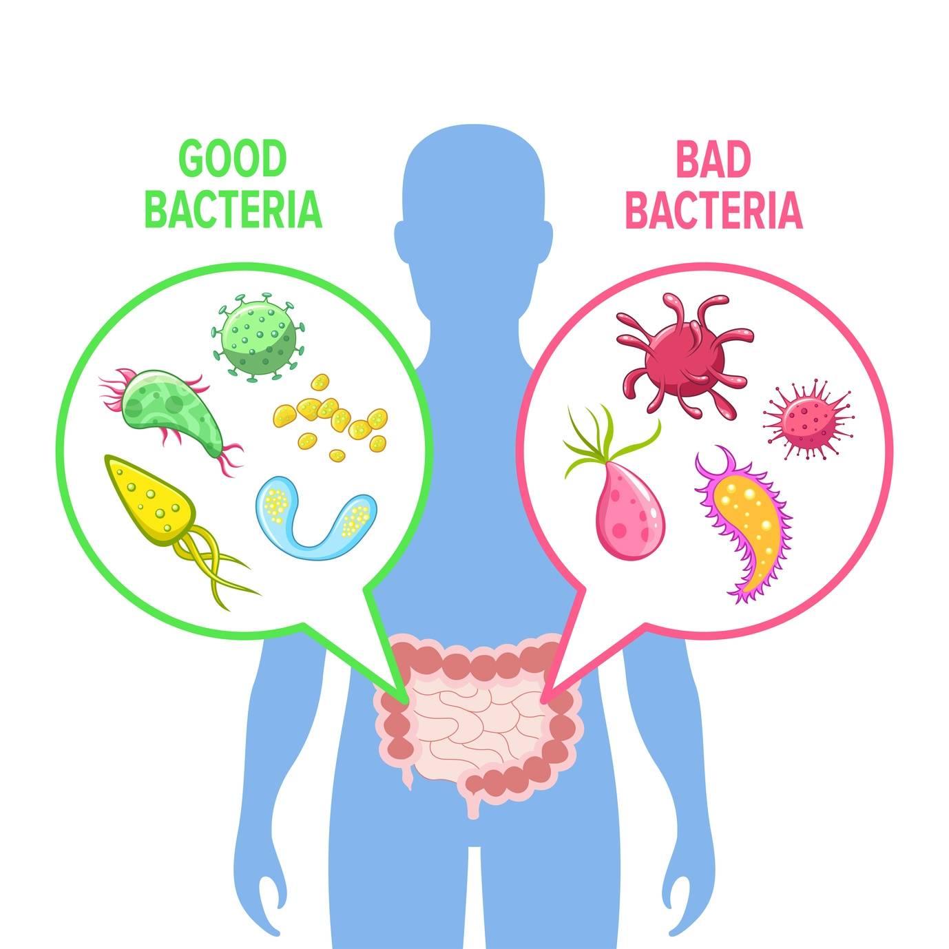 Mikroflora bakteryjna jelit. Probiotyki przy antybiotykoterapii.
