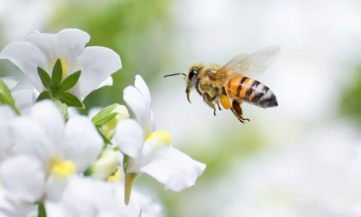 Pszczoła miodna - ratujmy pszczoły przed pestycydami.