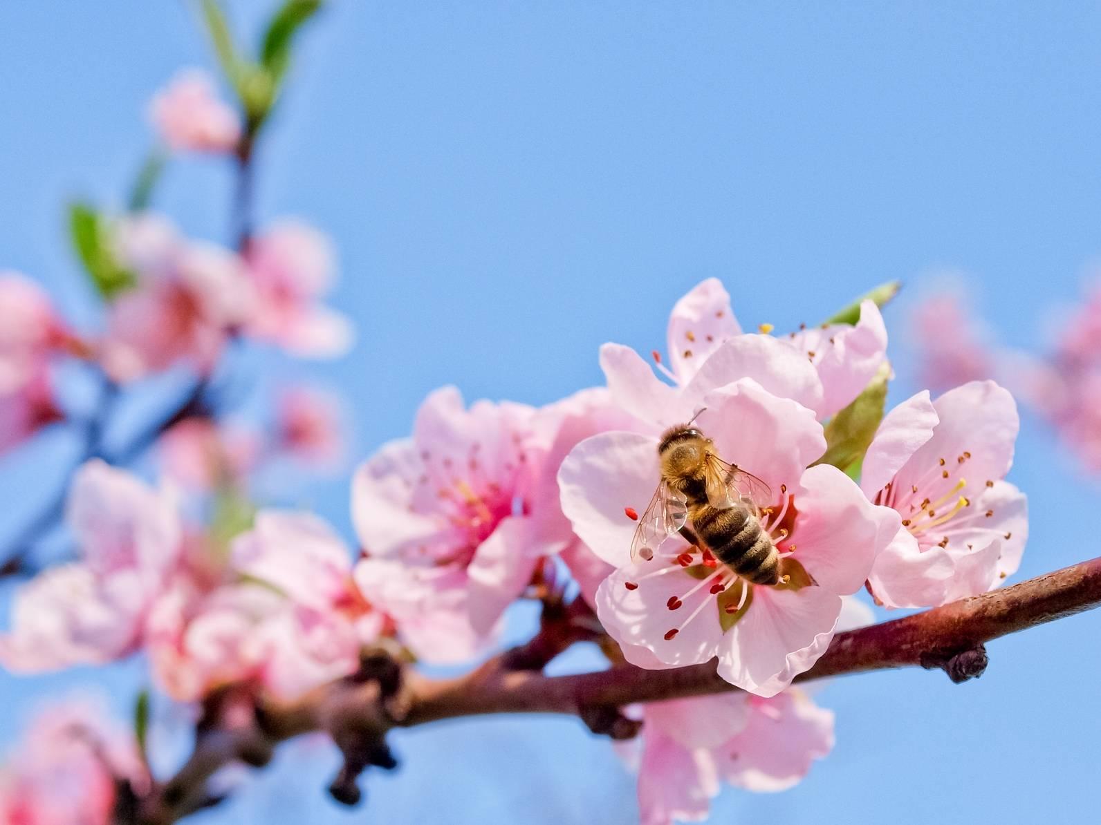 Pszczoły umierają, bez nich nie będzie pożywienia.