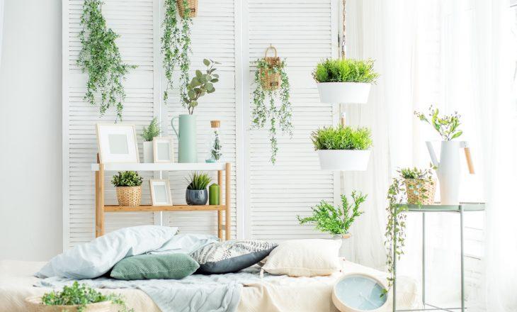 Trujące rośliny doniczkowe, których powinnaś unikać.