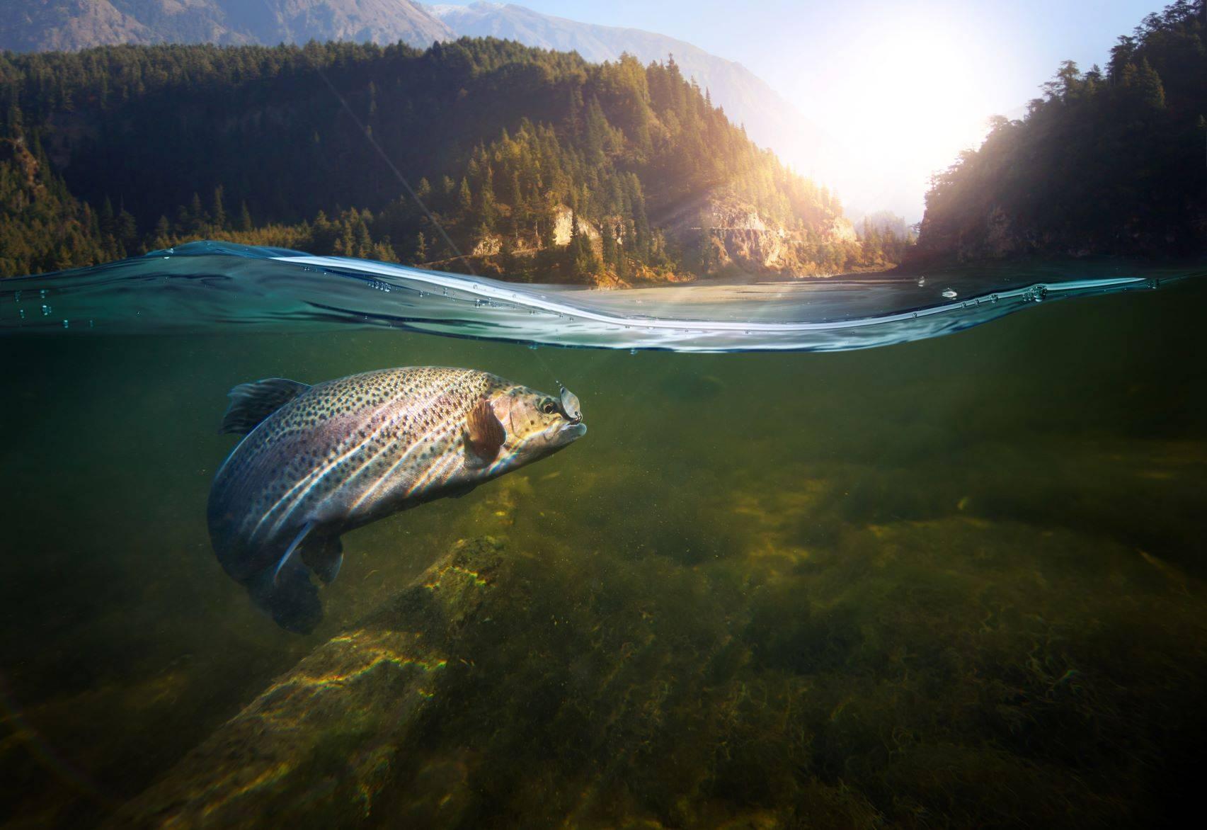Metale ciężkie w rybach - czy wiemy, co jemy?