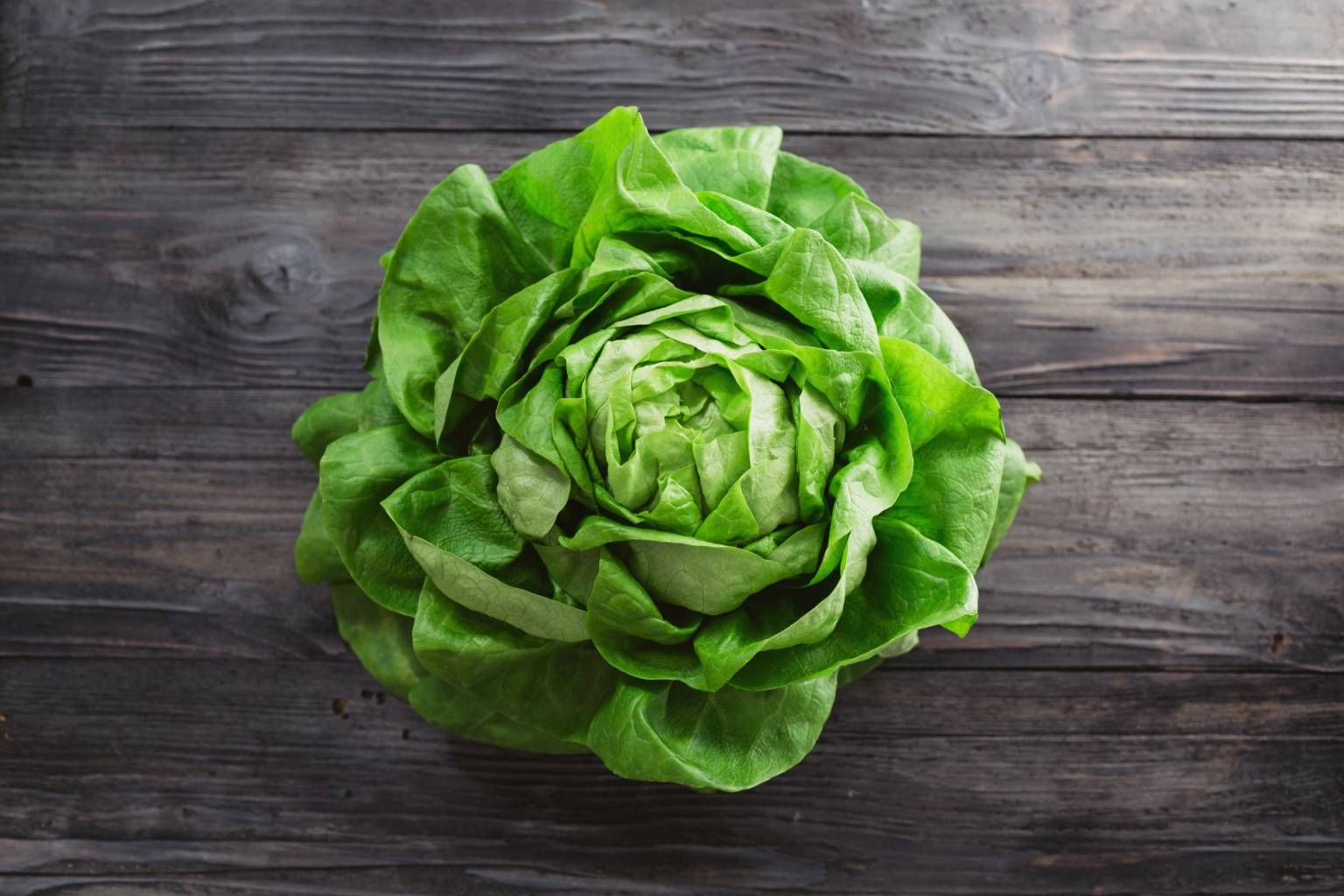 Główka sałaty gruntowej. Jak wegetarianizm pomaga ulepszyć świat?