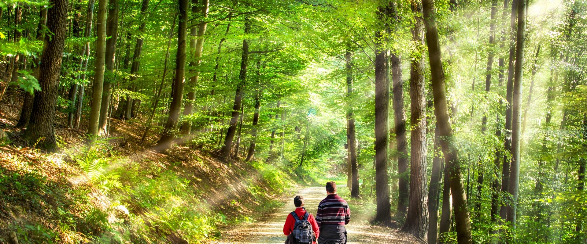 Shinrin-yoku - czym jest japońska kąpiel leśna? Para spaceruje po lesie.