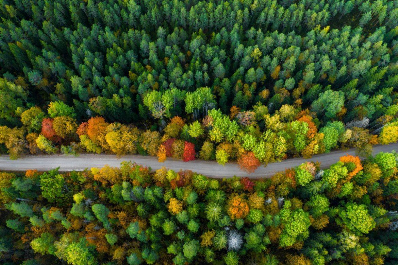 Leave No Trace - jak biwakować odpowiedzialnie, by zminimalizować swój ślad węglowy? Widok z góry na drogę przecinającą las.